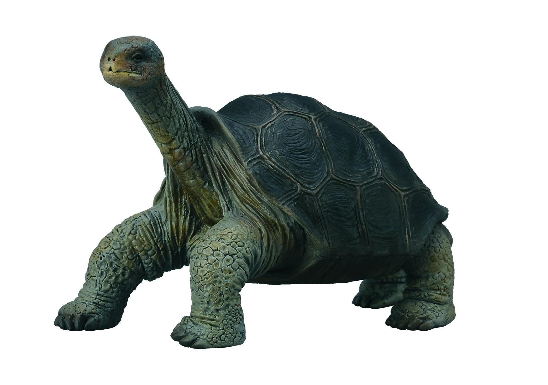 Wild Animals Galápagos tortoise 8 1 x 5 cm