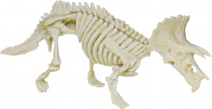 Johntoy opgravingsset Triceratops Science Explorer