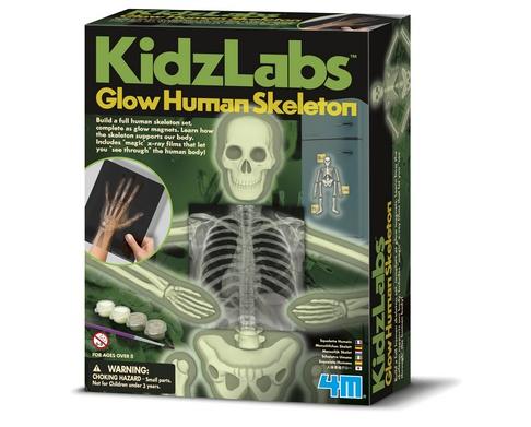 4M Kidzlabs Menselijk Skelet