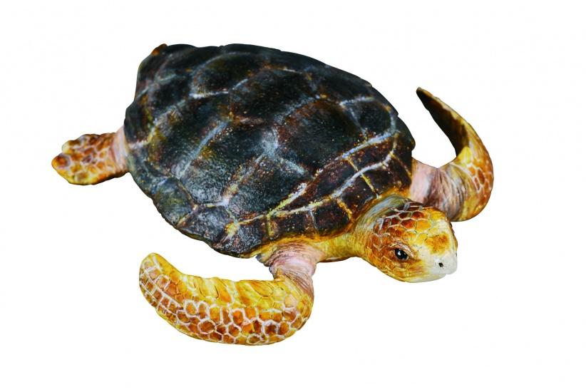 Collecta Zeedieren Schildpad 7 X 1 cm