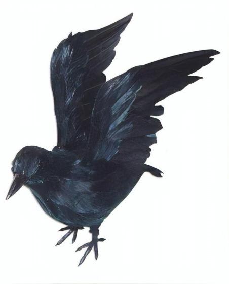 HAZA original décoration Corbeau 16 x 6 x 10 cm ailes fermées