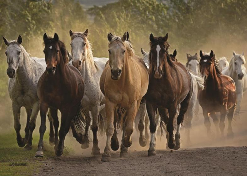 Jumbo Puzzel kudde paarden 1000 stukjes